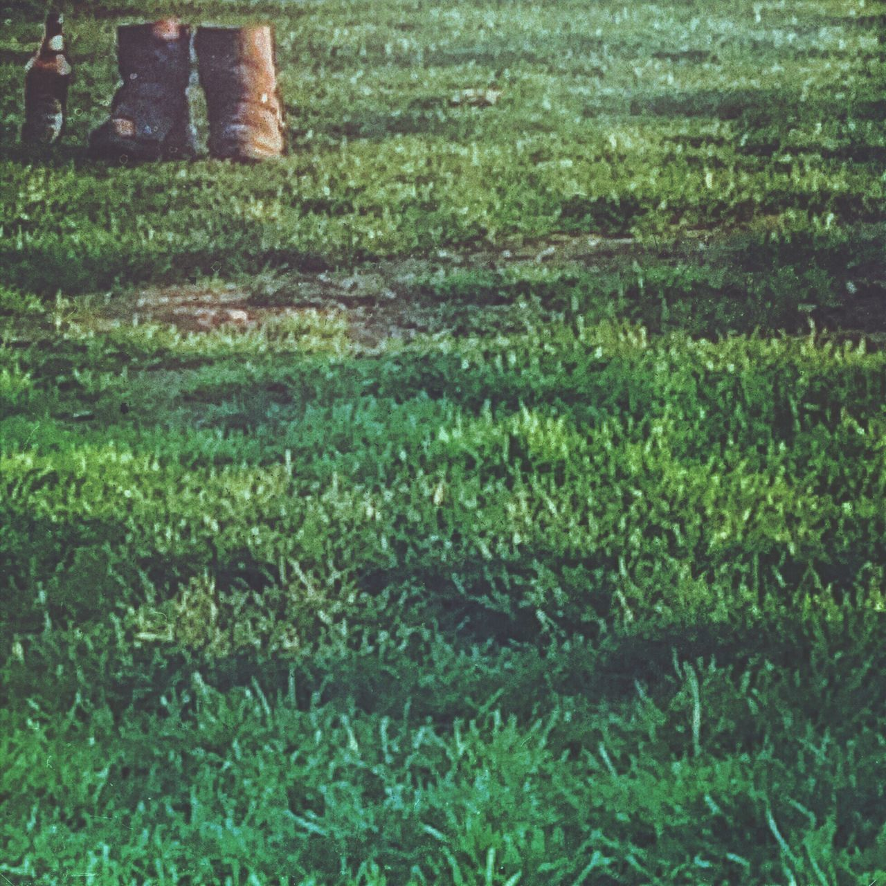 grass, day, nature, green color, no people, reflection, outdoors, growth, close-up, freshness