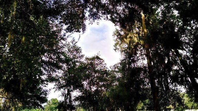 Woods Exploring Light Summer Hole Of Light Nature
