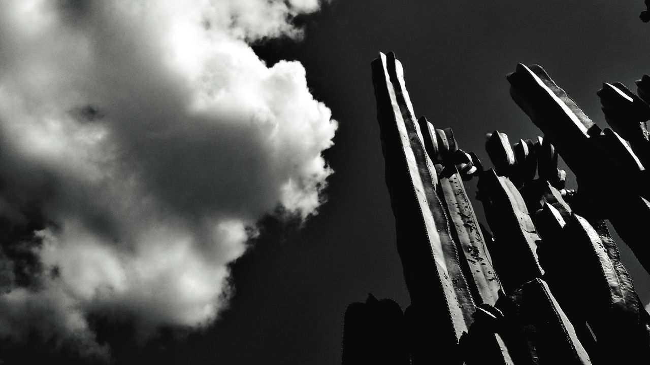 Sky Cloud - Sky Outdoors Nature Face Clouds Black And White Experimental Cactus Cactuses Lookingup Light And Shadow Photooftheday Natural Light Garden Photography Beauty In Nature Weirdface Amateur Photography Selftaughtartist Textures and Surfaces Patterns In Nature