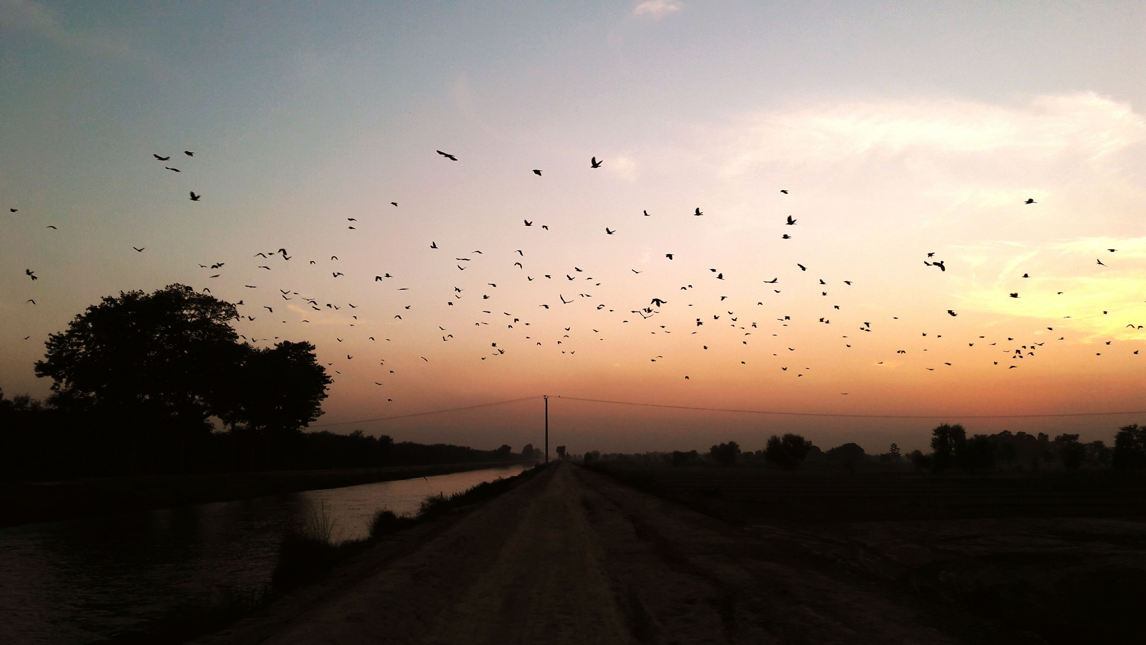 bird, flying, animal themes, animals in the wild, flock of birds, sunset, wildlife, sky, silhouette, nature, scenics, mid-air, tranquil scene, beauty in nature, water, cloud - sky, tranquility, medium group of animals, landscape