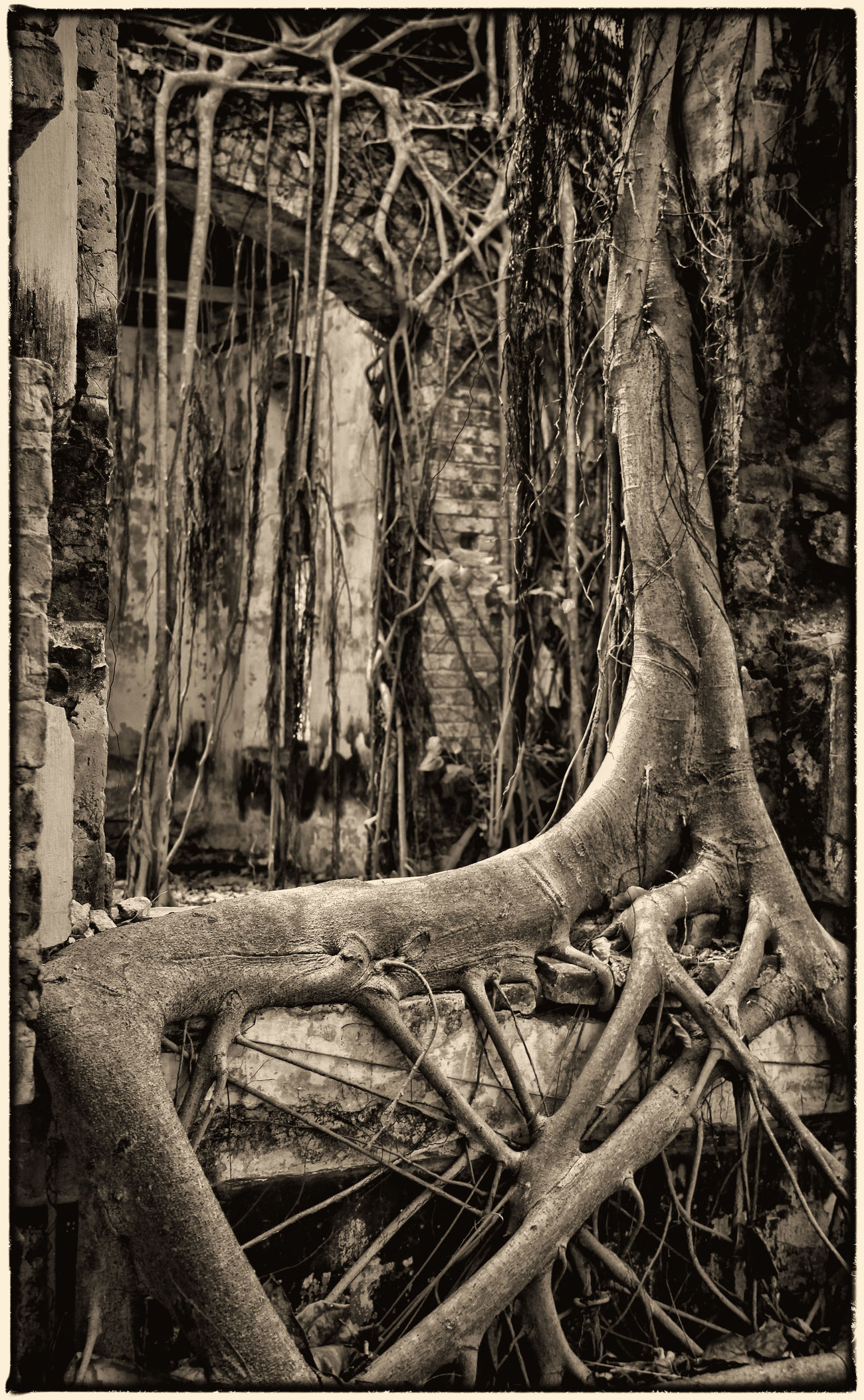 Beauty In Nature Black And White Collection  Blackandwhite Photography Haunted House Nature Root Rundown House Tree Trunk Vietnam Travel Vietnam Trip