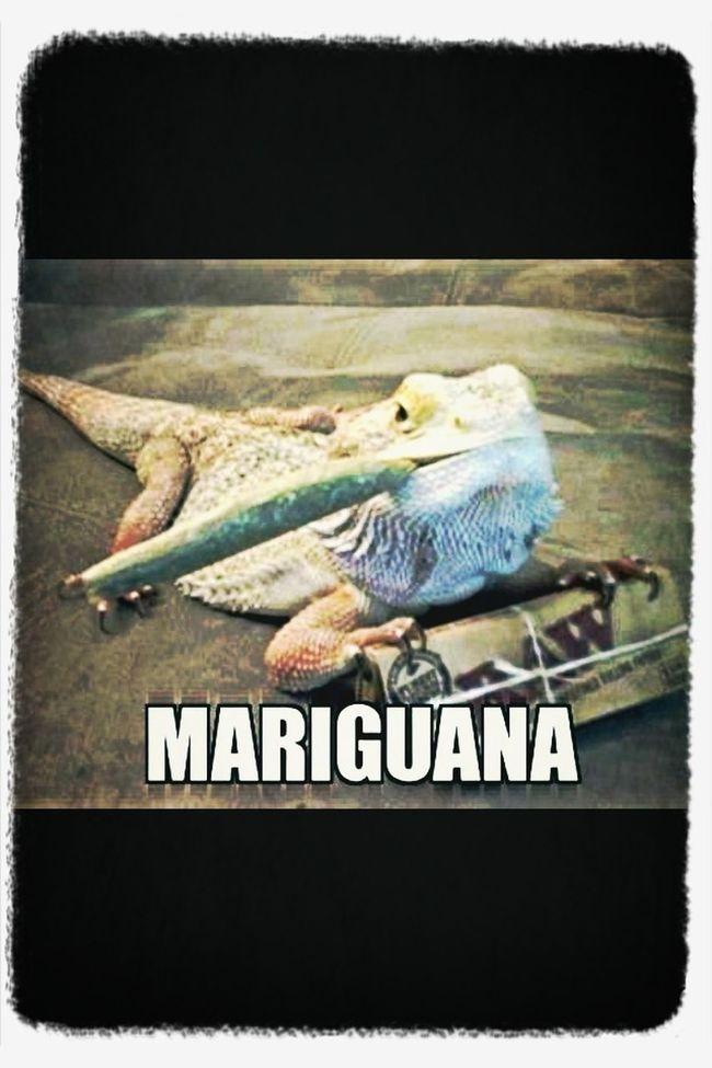Mariguana