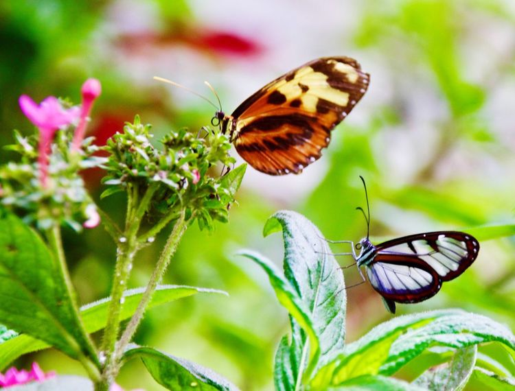 Únicas !!! Insect Butterfly - Insect Animal Themes Nature