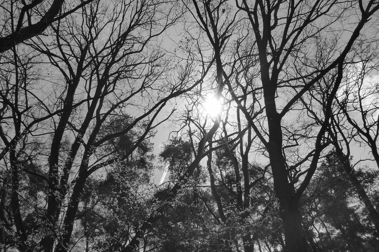 Bare Tree Beauty In Nature Black And White Branch Day Forest Growth Low Angle View Nature No People Outdoors Scenics Sky Sun Sunbeam Sunlight Tranquility Tree