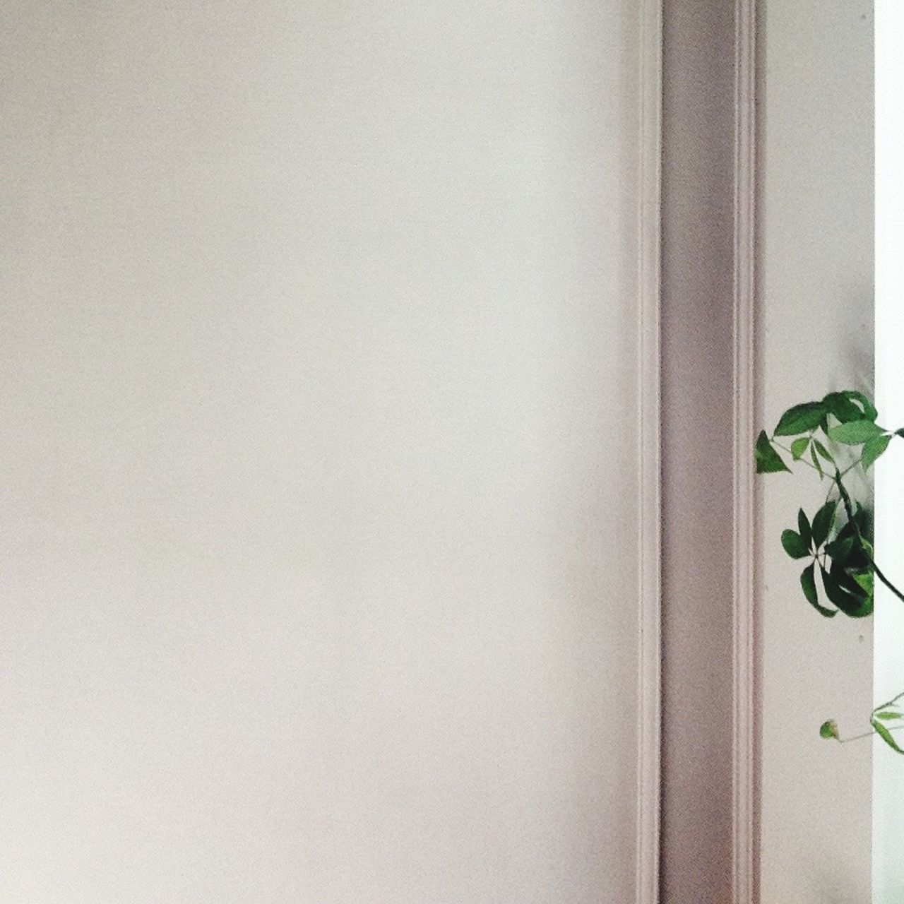 I don't know why, but I love this pic Green Plant Small Detail Empty Space