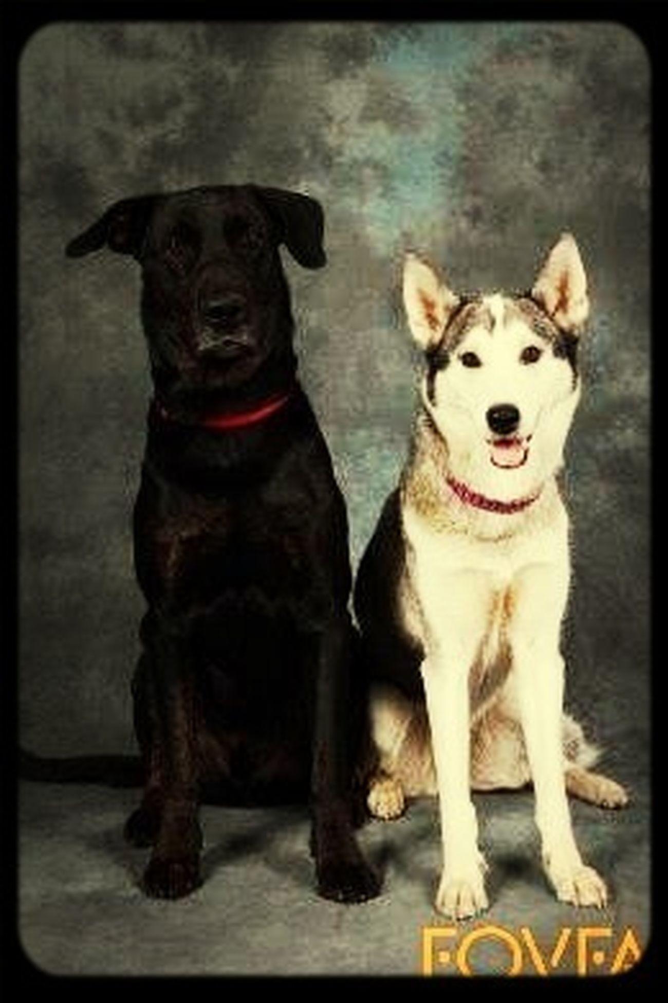 Tyson Och Daisy Hundarna