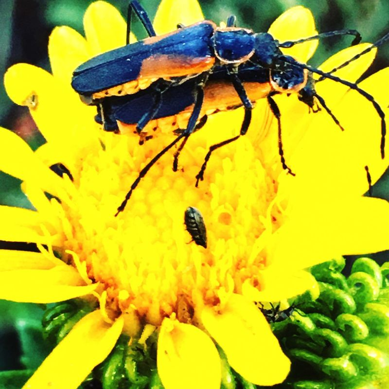 Insect Photography Nature_collection Colorado Photography Flowers Mountains