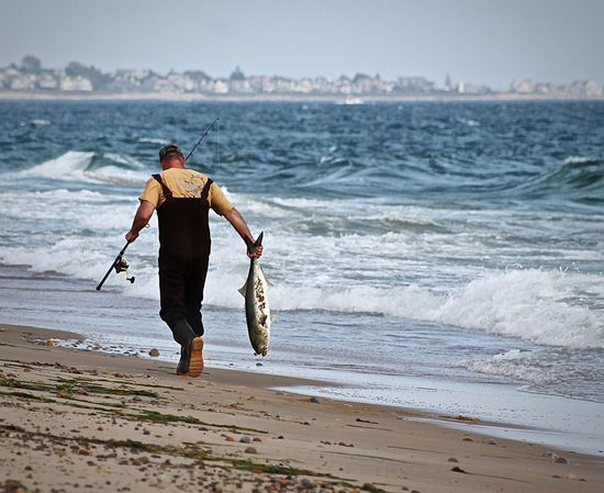 Heading Home Fishing Time Gone Fishing Catch And Release Bluefish Shoreline On The Beach Beachphotography Fisherman Capture The Moment