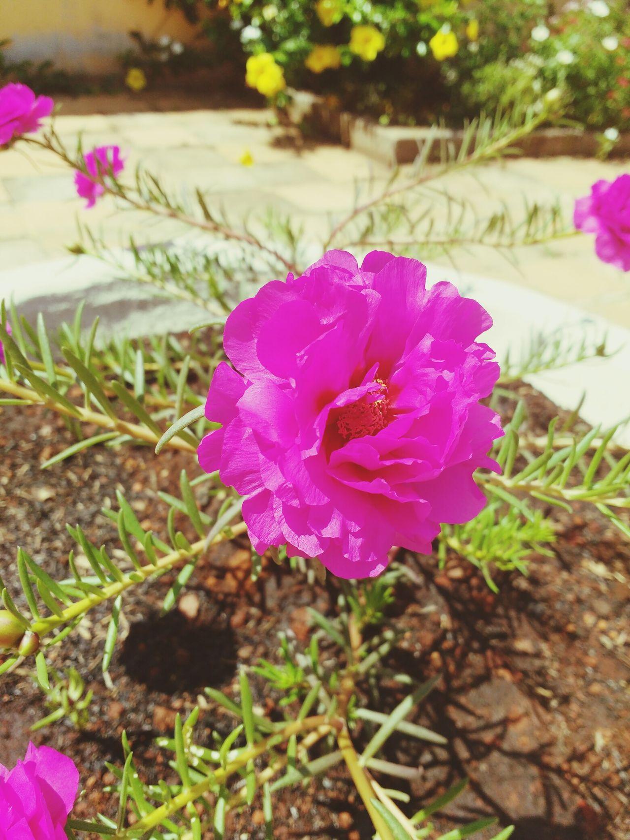 Onzehoras Jardim Goianiasualinda. Jardimamerica