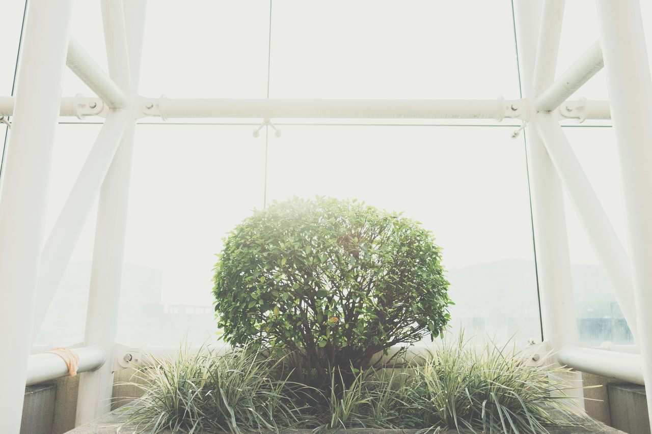 growth, plant, nature, potted plant, green color, indoors, no people, day, greenhouse, tree, beauty in nature, architecture, close-up