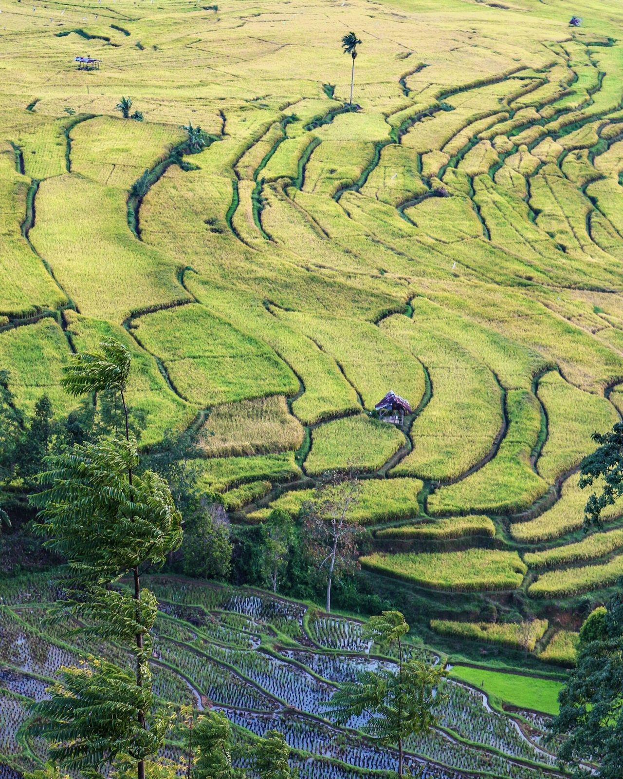 Ricefield of Tabek Valley... Landscape Photography Wonderfulindonesia