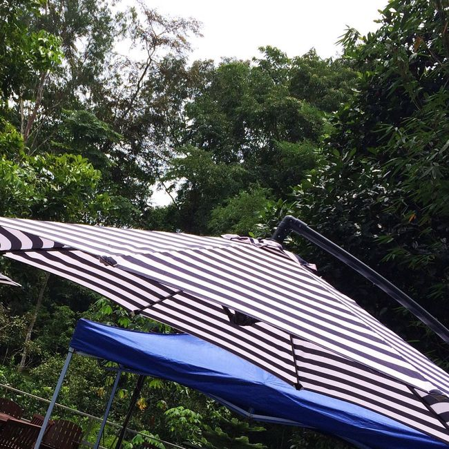 Forest Umbrella Malaysia Family Green Cottage Stripes Everywhere Forest Cottage