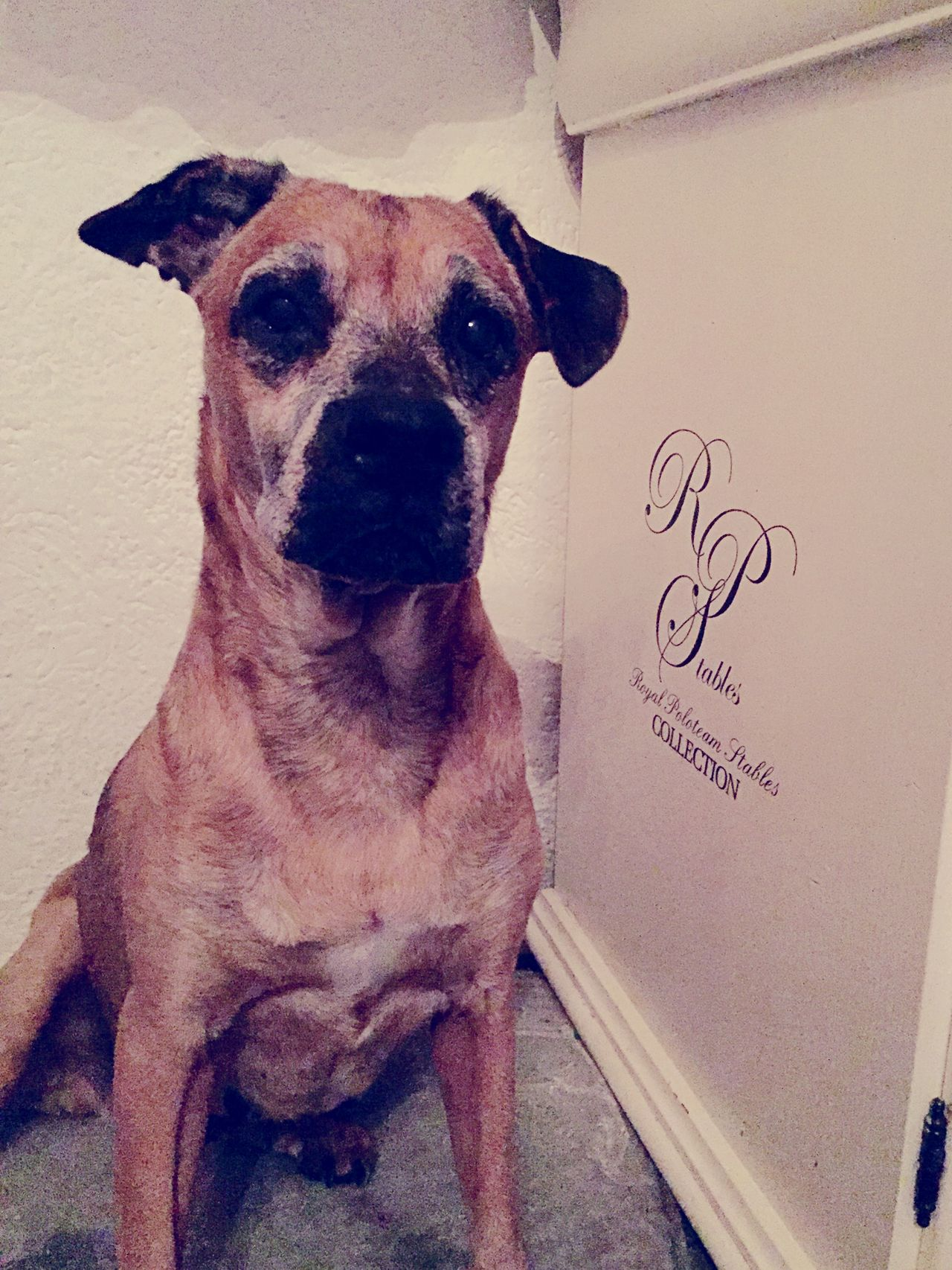 I Love My Dog Old Dog Grey Grumpy Sweet Love Dogs Of EyeEm IPhoneography Taking Photos Hollandsnextdogmodel