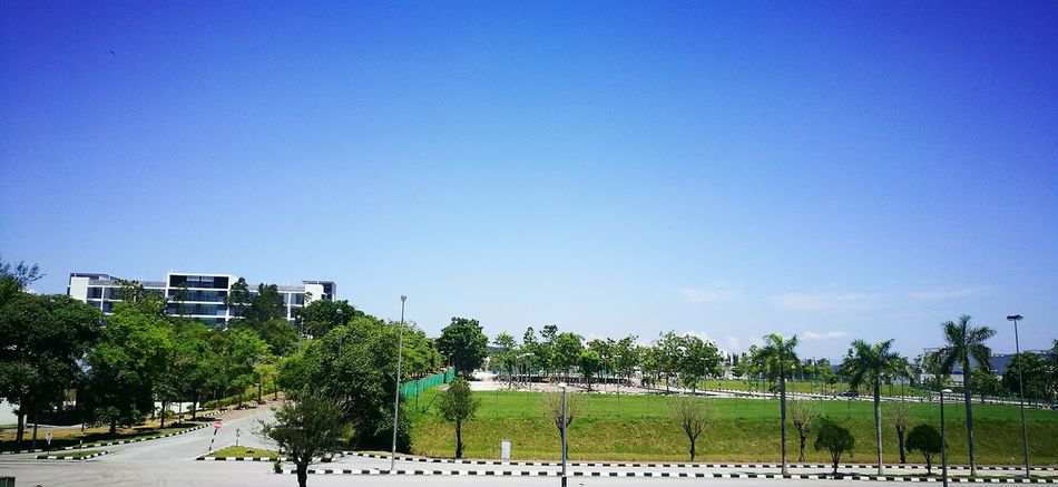 Tree Blue Clear Sky Road Day Outdoors Green Sky No People Scenics Lone Bird