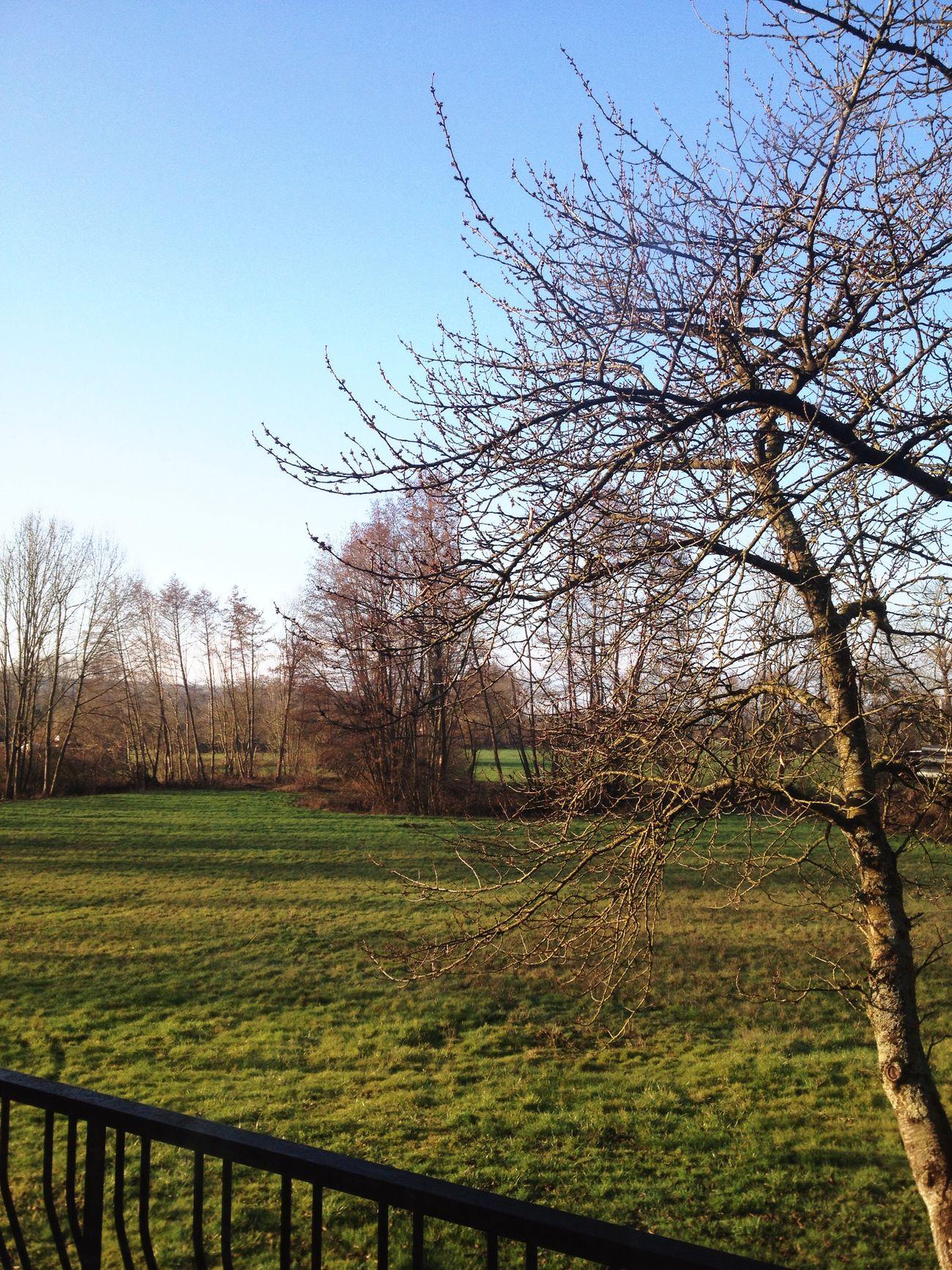 ✨🍂 Taking Photos Hello World Nature Arbre Ciel Blue Bleu Sky Beautiful