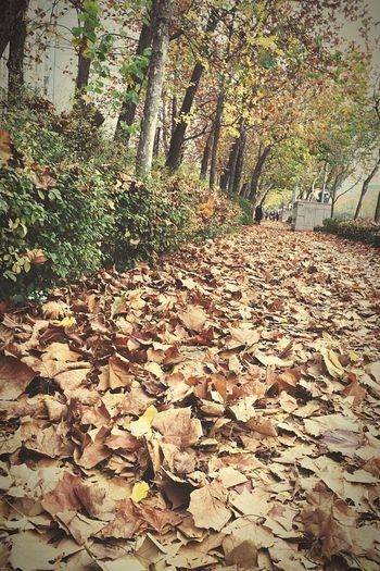 Autumn🍁🍁🍁 Fallen Leaves Trees Streetphotography South Korea Seoul