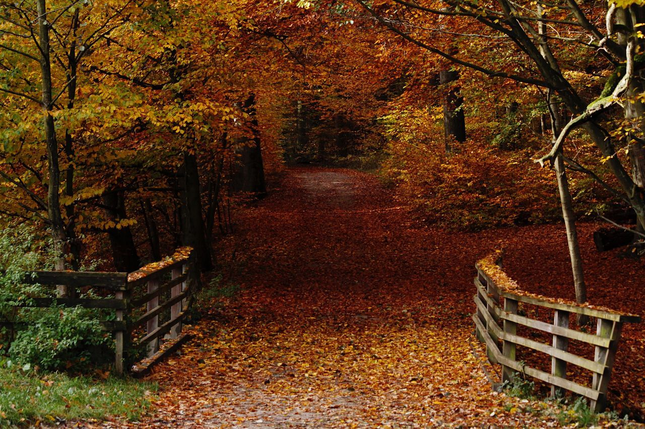Hello World Hello Schleswig Holstein Autumn Nature Outdoors Photograpghy  Outdoors Life Tree Colors Of Autumn Colorsplash Colorful Taking Photos Click Click 📷📷📷 Real Life Leafs 🍃 Bridge No People Eye For Details Canon Enjoying Life Sachsenwald Beauty In Nature Forest Tree Germany🇩🇪