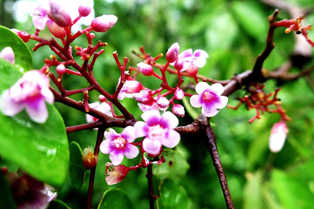 flower, growth, fragility, beauty in nature, nature, freshness, pink color, petal, branch, tree, no people, plant, twig, day, outdoors, flower head, springtime, close-up, blooming, leaf