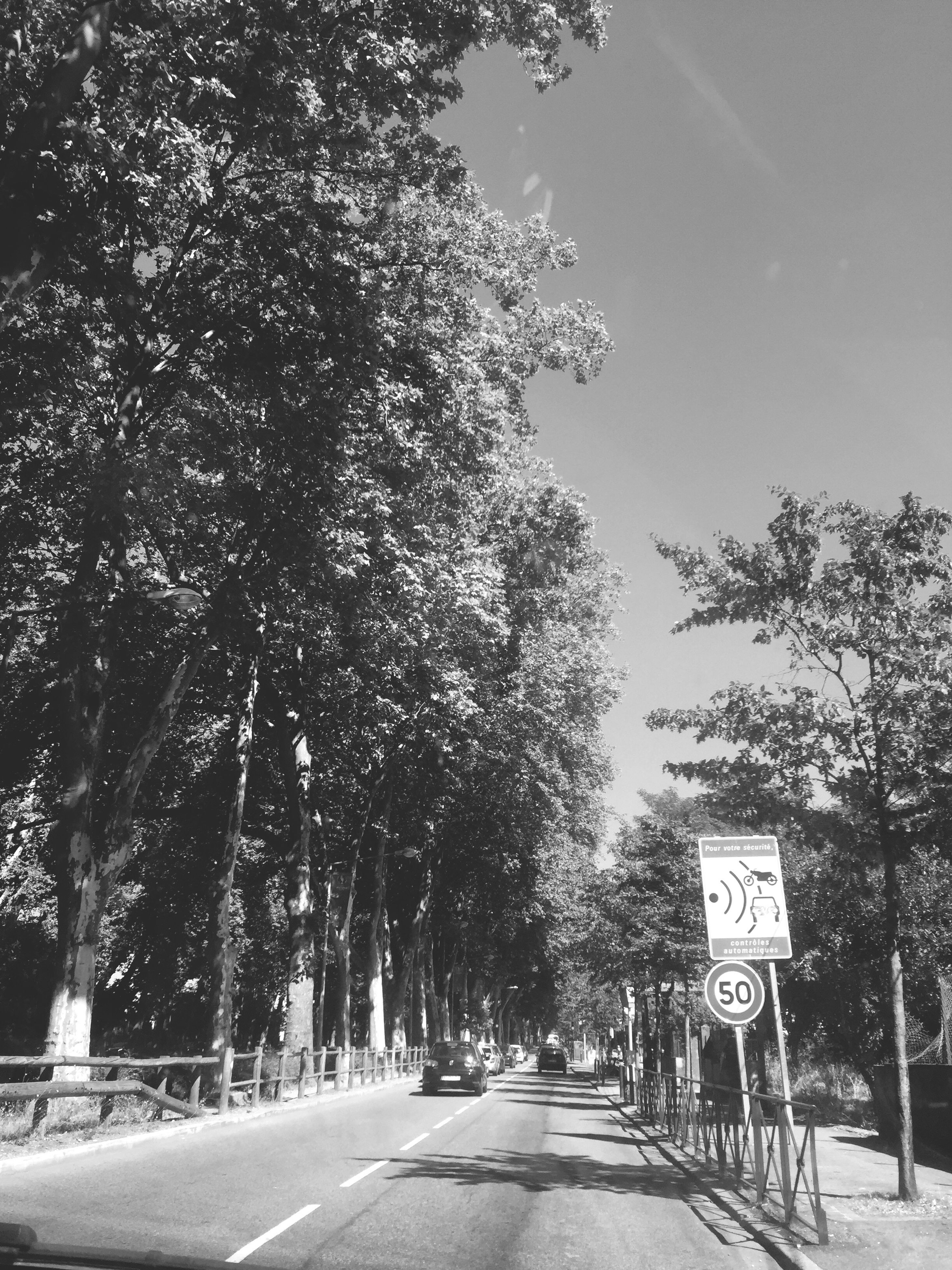 tree, the way forward, transportation, road, street, men, road marking, diminishing perspective, treelined, walking, lifestyles, vanishing point, growth, rear view, person, outdoors, day, road sign, sky