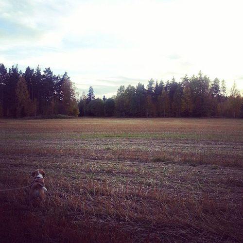 Grinig hund som inte fick springa efter rådjurenHundvakt
