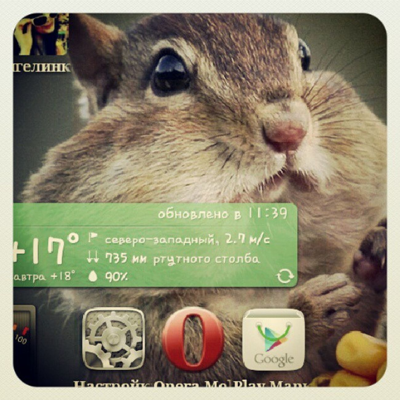 животные Android андройд хомяк new новое