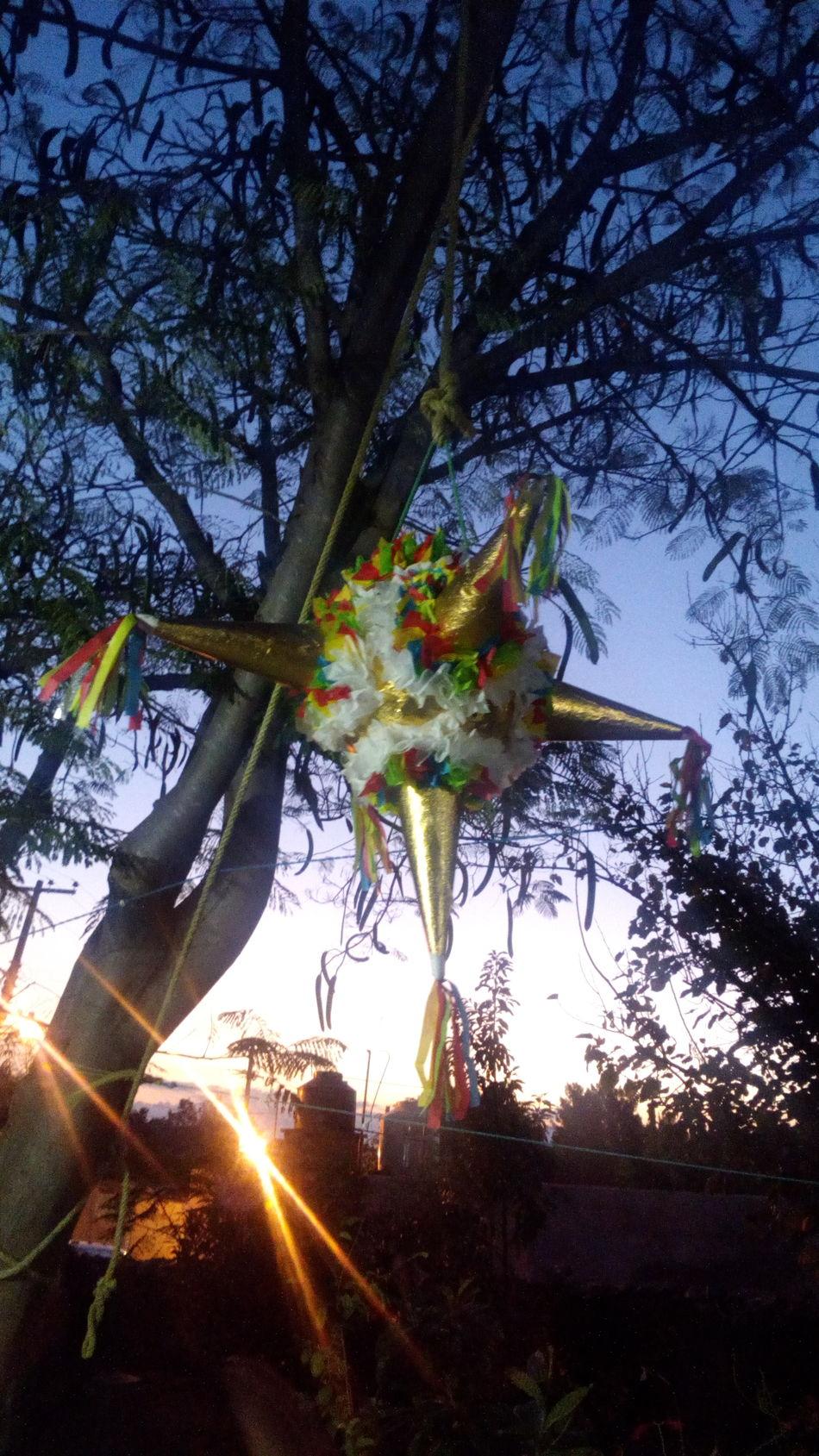 Tree Christmas Christmas Ornament Piñata Handmade Mexico