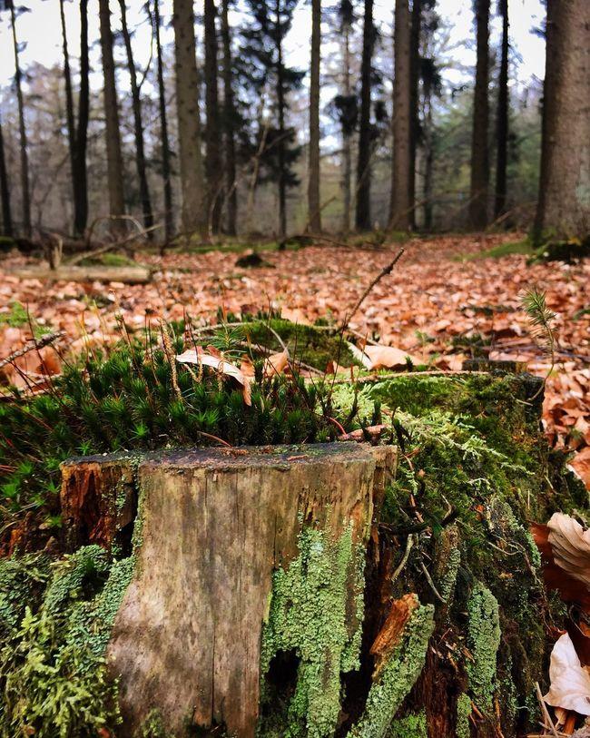 Bautiful.. 👌🏼 Nature Photography