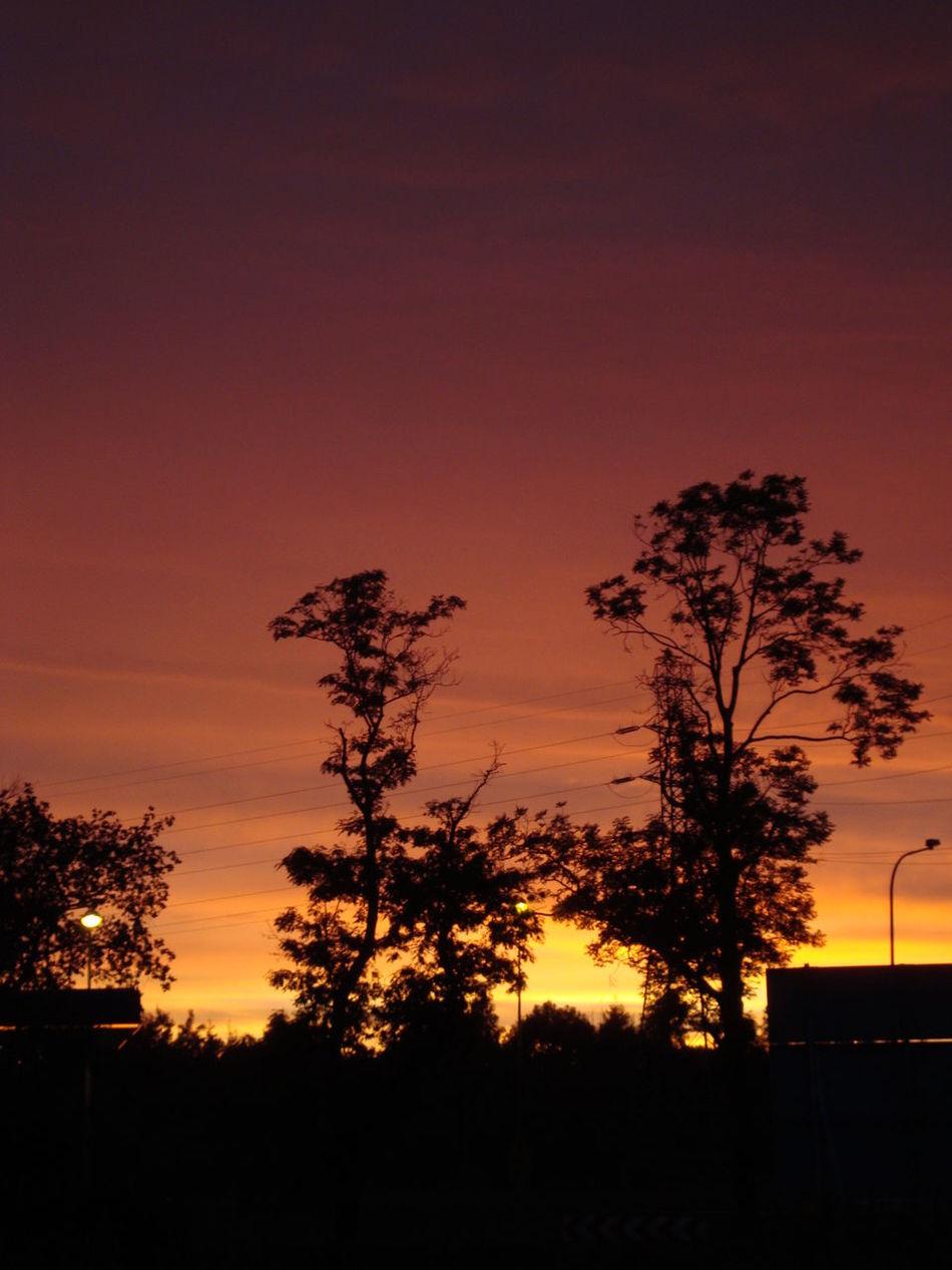 Sunset Silhouette Tree Dramatic Sky Sky No People Palm Tree Night Romantic Sky Nature Outdoors Beauty In Nature Astronomy Niece 💕 Gdańsk 👌🏼 Communication Street Photography Skylovers Skyscapes Sky_collection Polska Poland 💗 Gdańskeye Gdansk (Danzig)