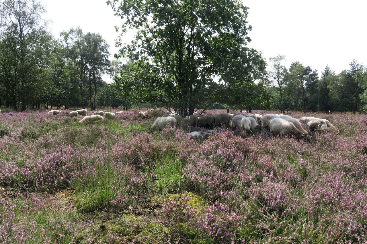 Sheep Sheeps Sheep🐑 Sheep Herding Sheep Farm Sheepfarm