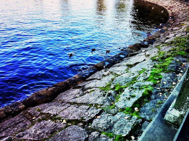 Who wants to feed ducks? ;) Sea Ducks In Water