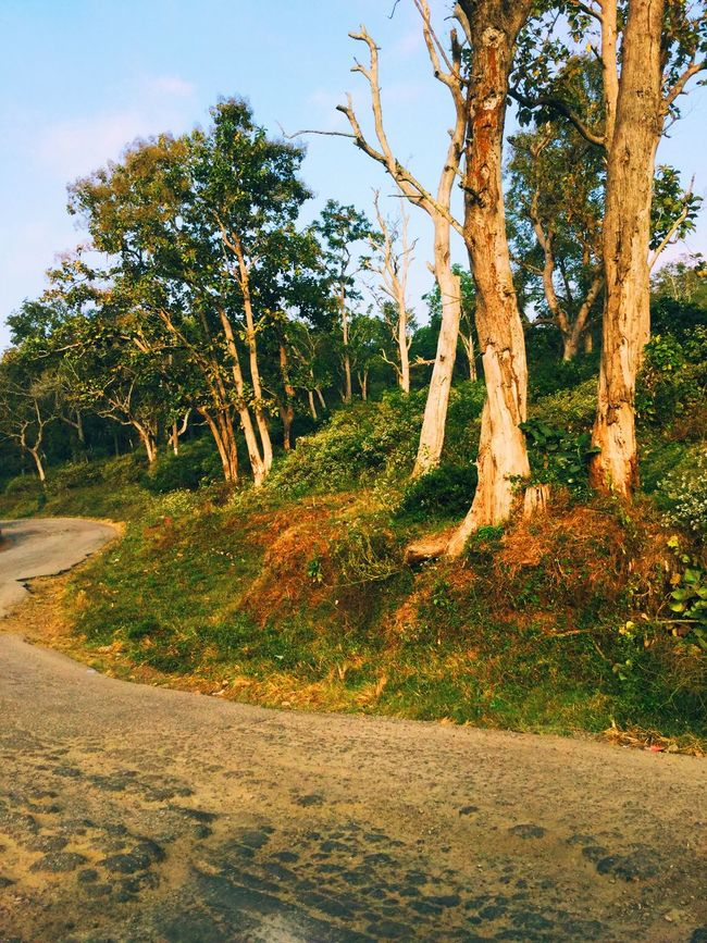 Branch Change Day Forest Grass Green Color Growing Growth Landscape Light Light And Shadow Nature No People Non-urban Scene Outdoors Relaxing Moments Road Tranquil Scene Tranquility Tree Tree Trunk Tropical Climate
