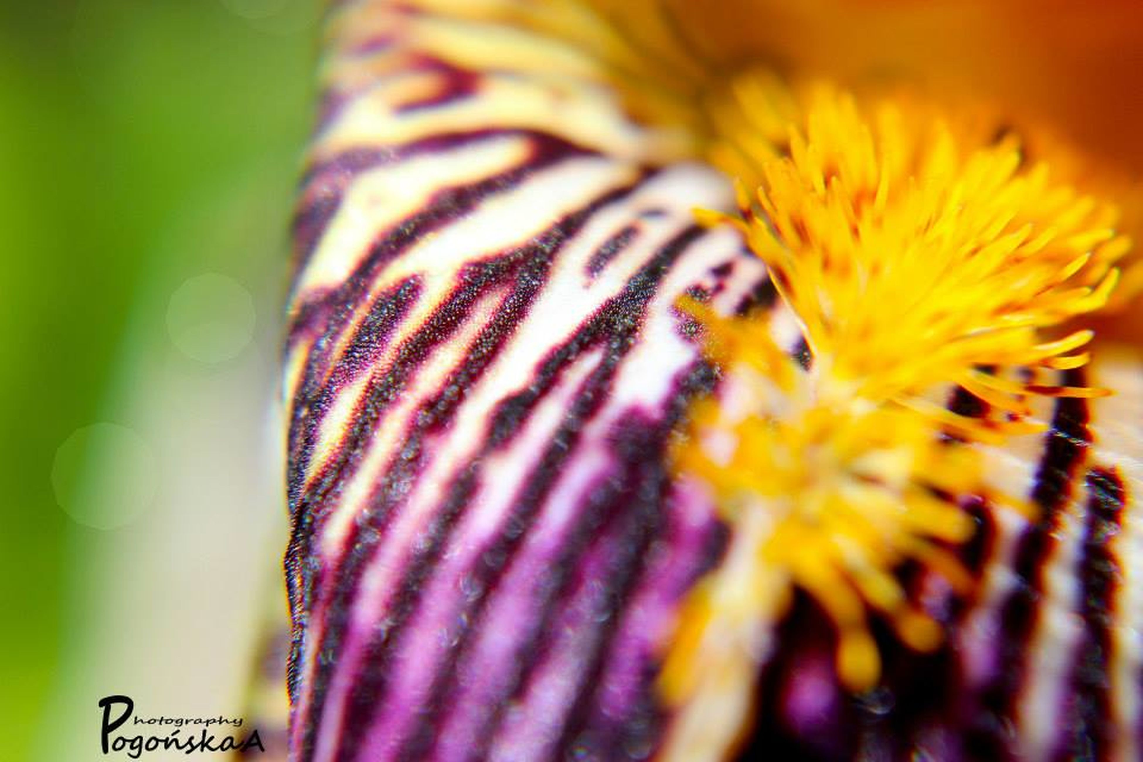 flower, close-up, yellow, petal, focus on foreground, flower head, fragility, one animal, animal themes, freshness, selective focus, beauty in nature, nature, insect, no people, animals in the wild, wildlife, day, blooming, outdoors
