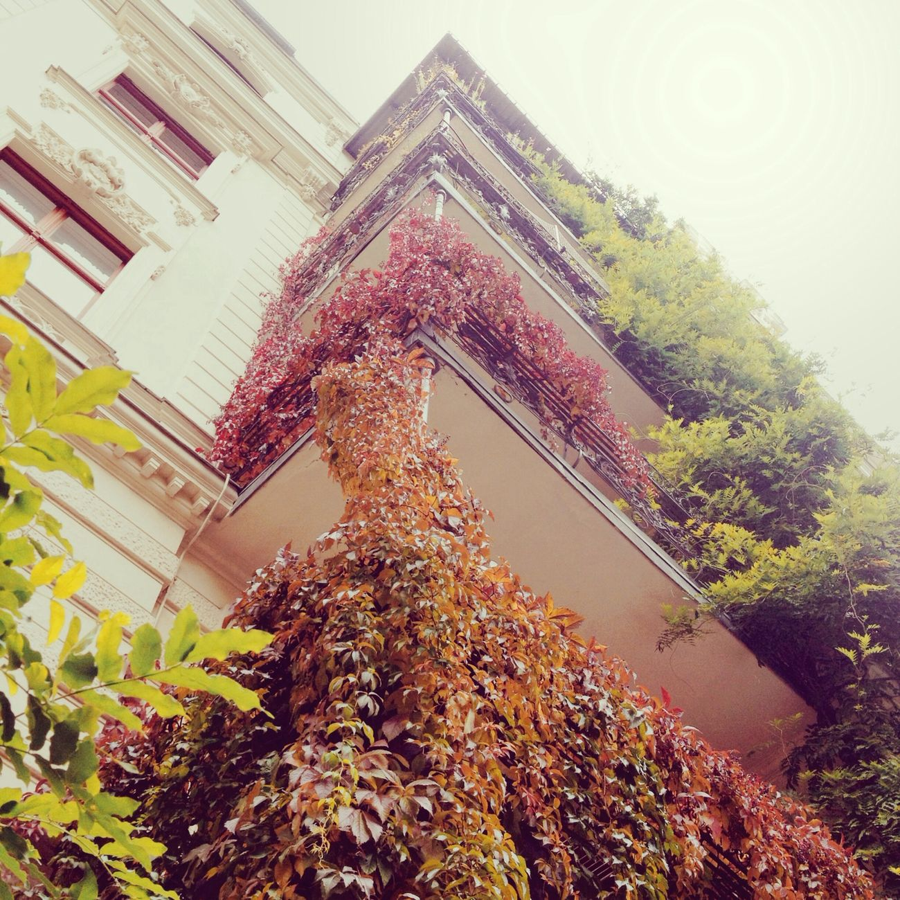 Autumn Herbst Colorful