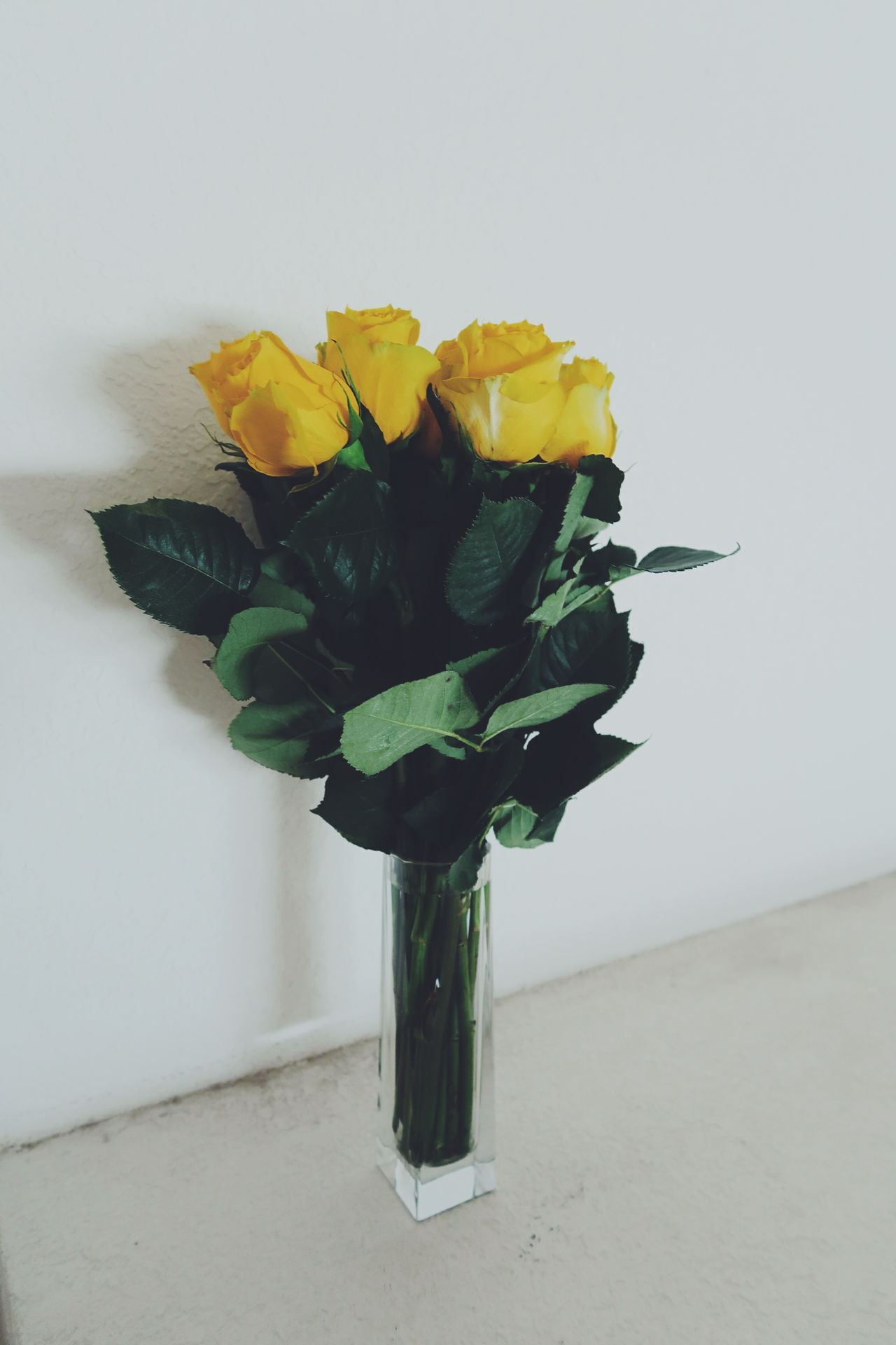 Flower Indoors  Vase Leaf No People Plant Fragility Beauty In Nature Nature Freshness Day White Background Flower Head Close-up Yellow Flowers Yellow Rose Yellow Roses Yellow