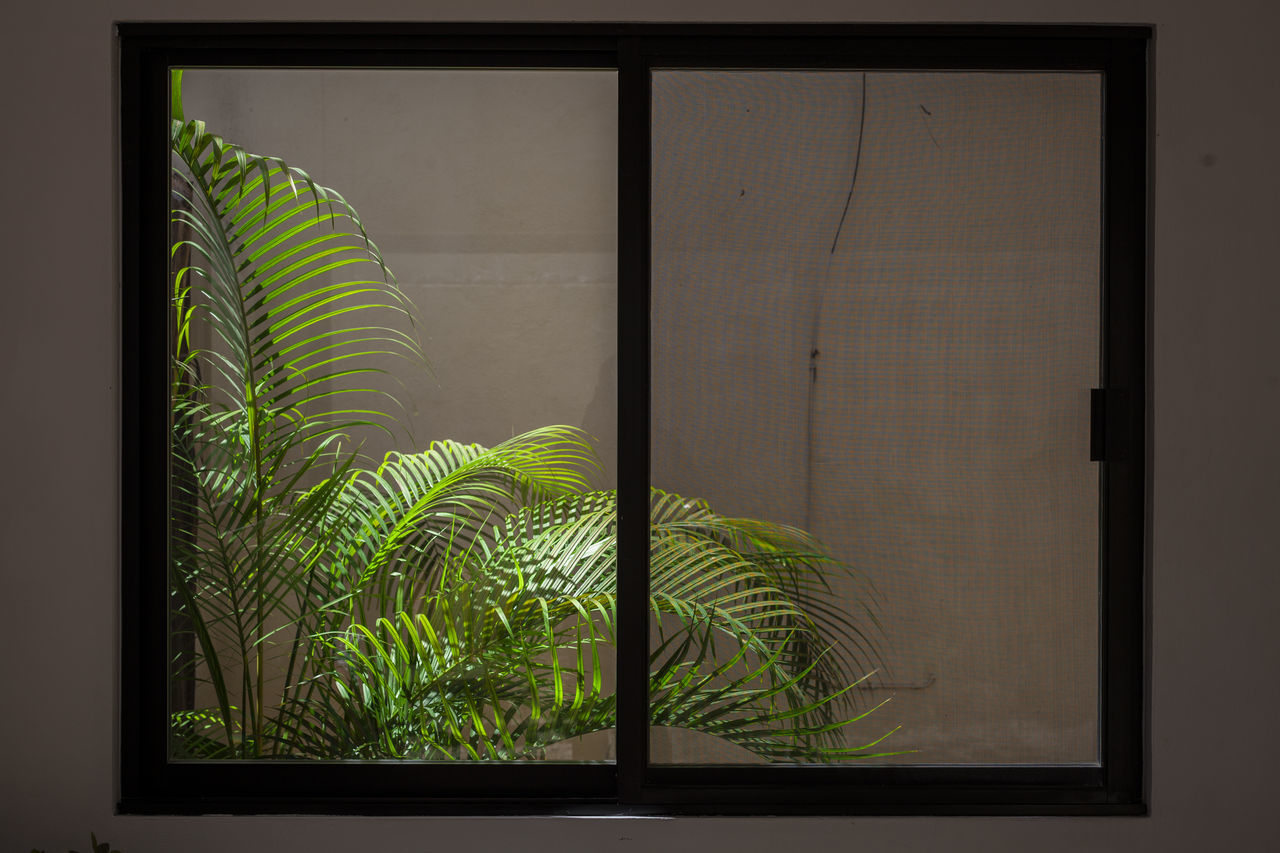 growth, plant, green color, leaf, nature, no people, indoors, close-up, fern, day, freshness, beauty in nature