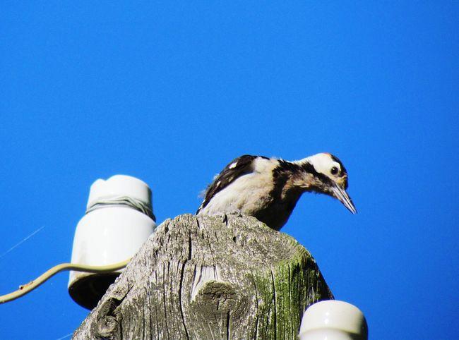 Enjoying Life Hello World Beautifulmoment Nature Photography Birds Bird Photography Helloworld Beautiful Day Beautiful View Myview Traveling