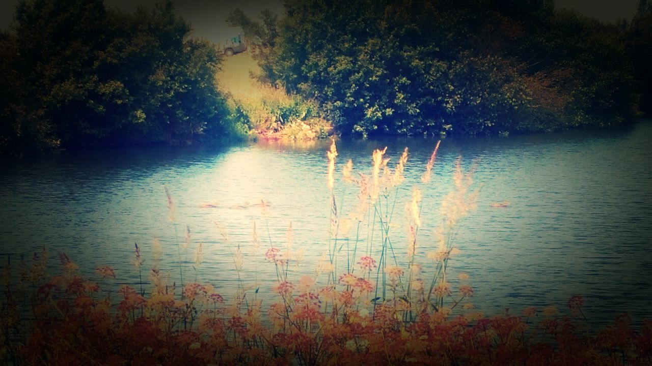 water, reflection, nature, lake, tree, no people, tranquility, beauty in nature, tranquil scene, scenics, outdoors, day