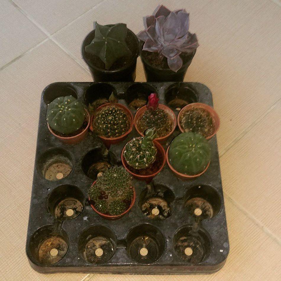 Yeni FAMILYA Cactusturkey Cacti Kaktüs cactus antalya