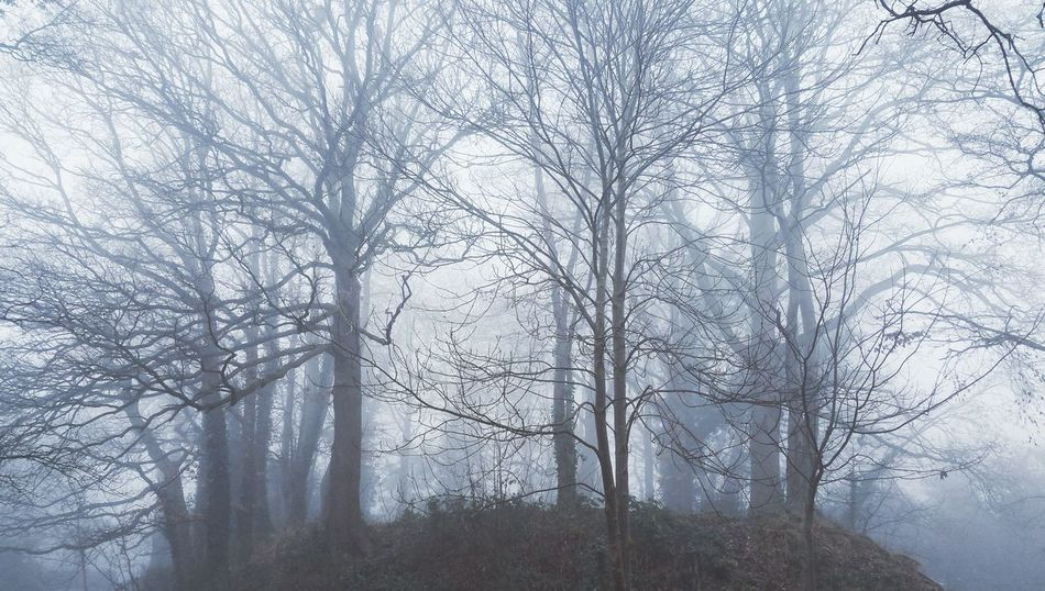 ...An Ancient fort site. .. Tree Growth Tranquility Branch No People Day Outdoors ScenicsWinter Mist Soft Mighty Tree Newtown Powys Wales Foggy Fog Forest Trees Peace Softness Beauty In Nature Nature Park Park - Man Made Space