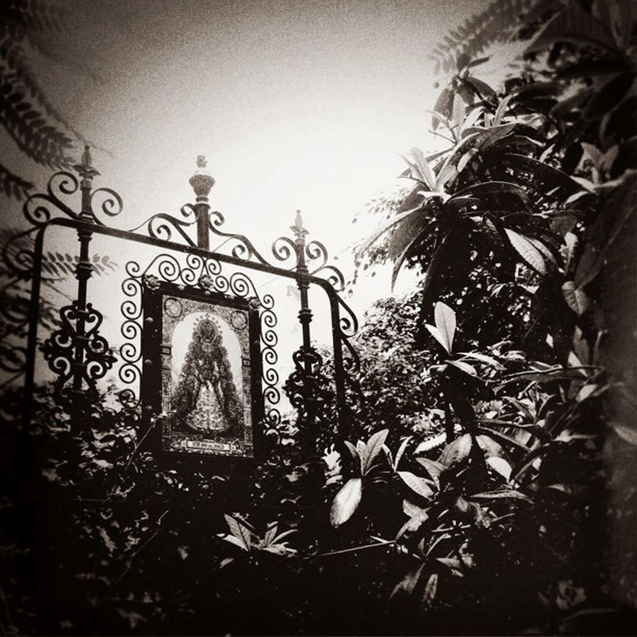 Patio en #triana, #callejeando por #sevilla Sevilla Callejeando Triana Sevillania