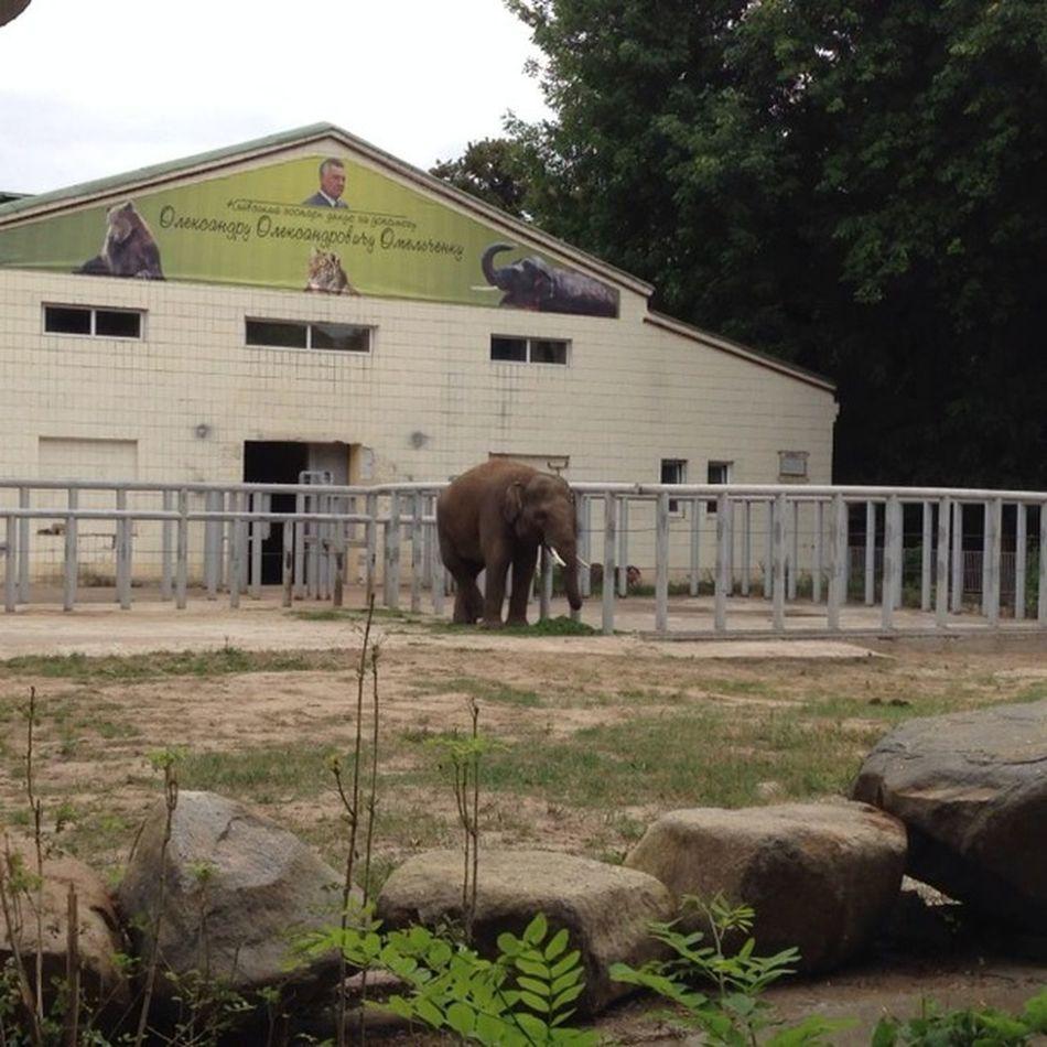 #elephant #киевскийзоопарк #kiev_ig #kievblog #insta_kiev Nature Elephant Kievblog Insta_kiev Kiev_ig киевскийзоопарк