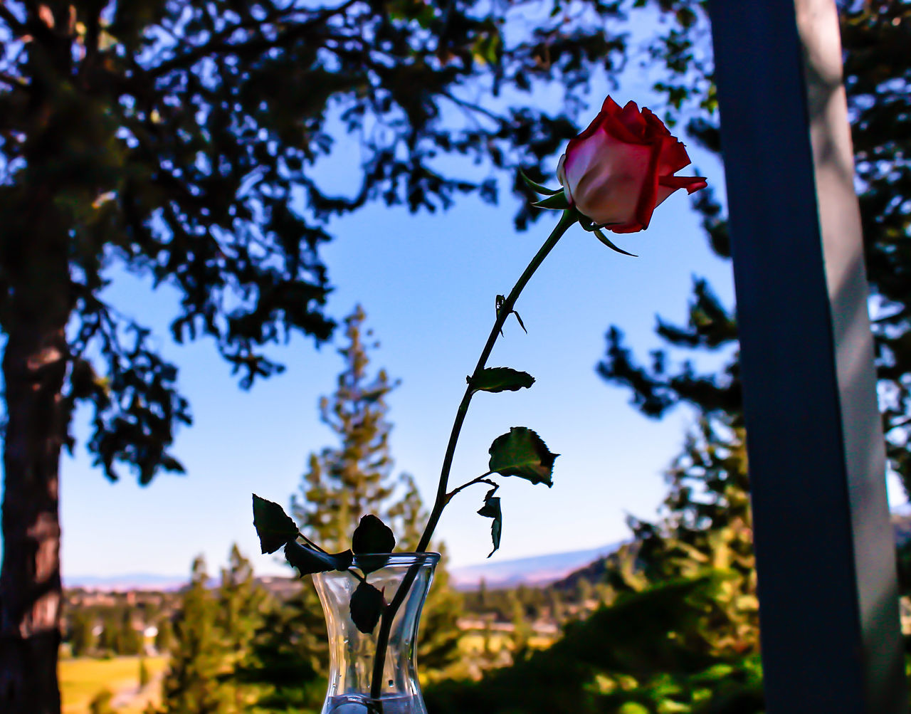Diamond Mafia Photography Garden Photography Lake Shastina Gardens Mount Shasta, California Nature Photography Landscape Mountains Clouds And Sky Lake Red Roses