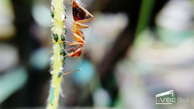 Insects  Antslife Nature Macro Photography Beautiful Creatures Mcl