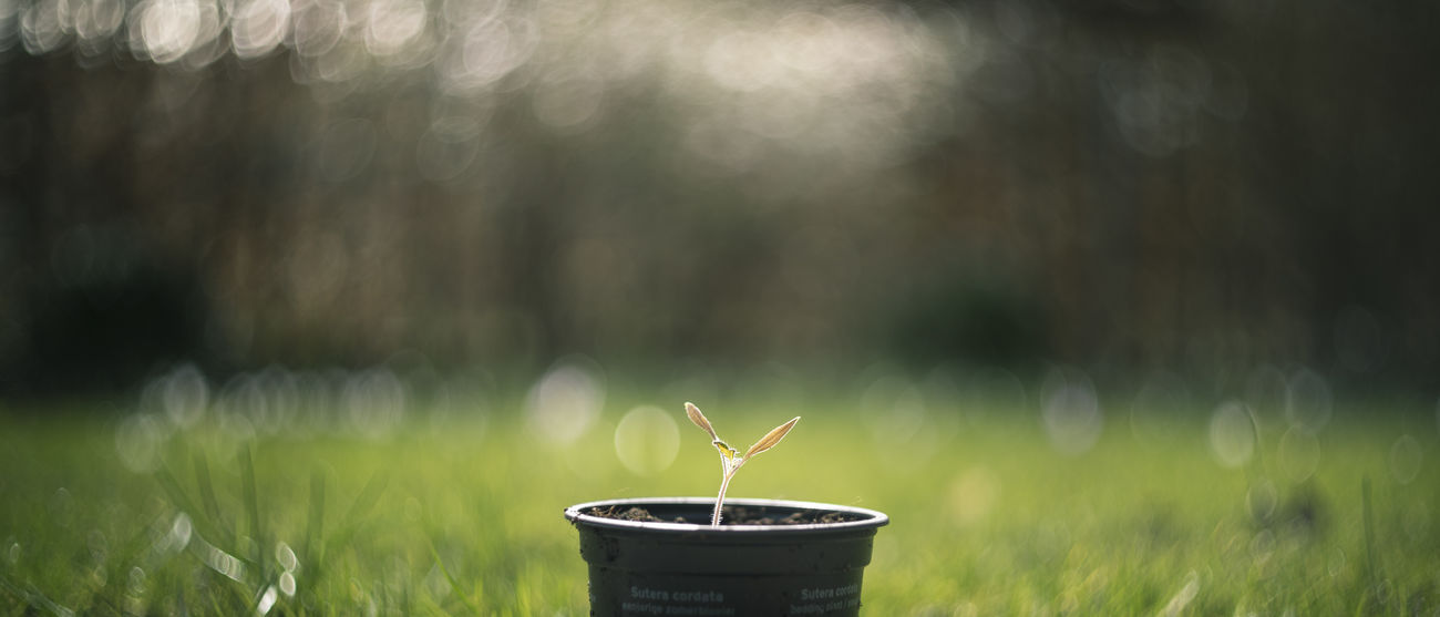 Little seedling waiting on more sunhine. Banner Bokeh Cinematic Color Graded Depth Of Field Detail Gardening Grass Green Leaves Little Leaves Little Plant Seedling Shallow Spring Spring Feeling Sprouting Sun Shine On Me Sunshine Swirl Swirly Tiny Leaves Tiny Plant Waiting Wide