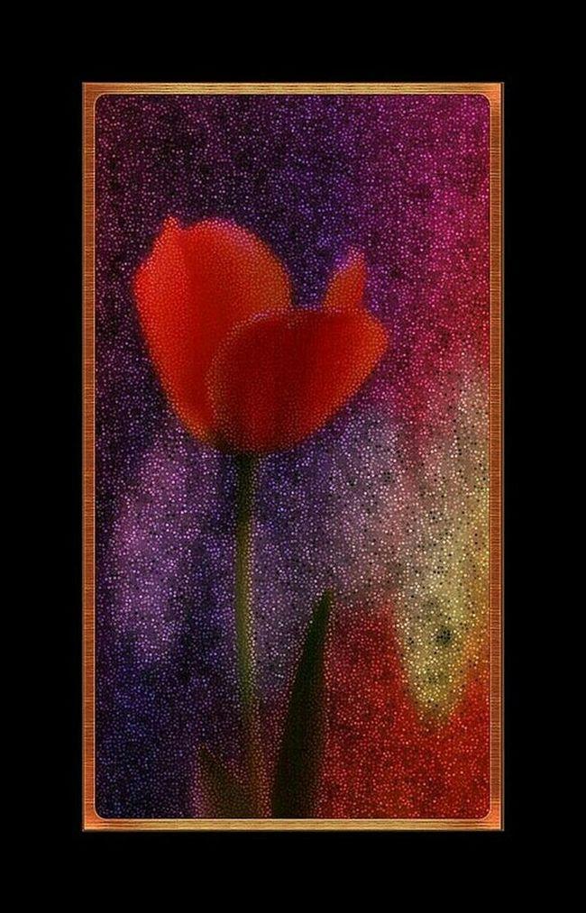 Photo Des Fleurs Red