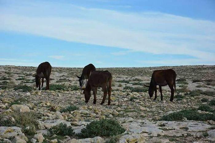 Donkey Dinner Hill Nature Kalaatsenan Kef Peace of Mind  السكينة و راحة البال للناس بكل :)