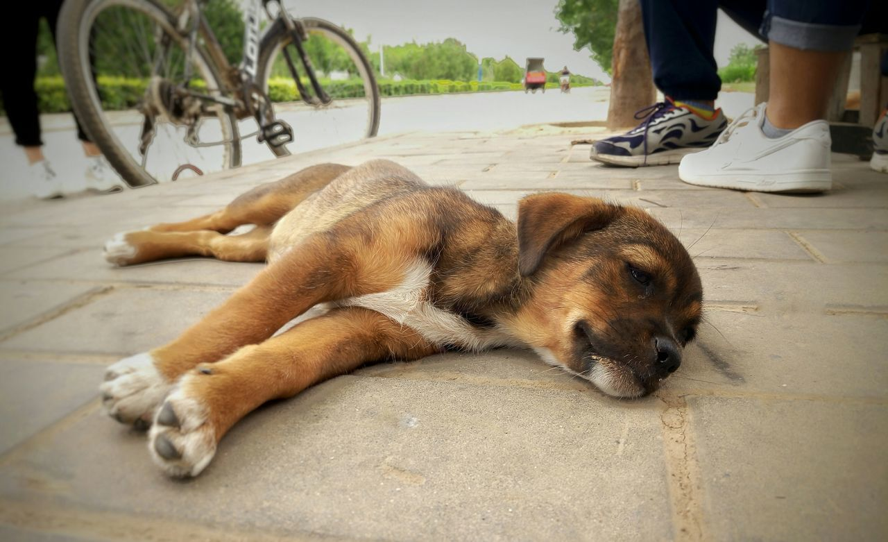 dog, pets, domestic animals, low section, one animal, human leg, mammal, real people, day, one person, men, relaxation, human body part, outdoors, people