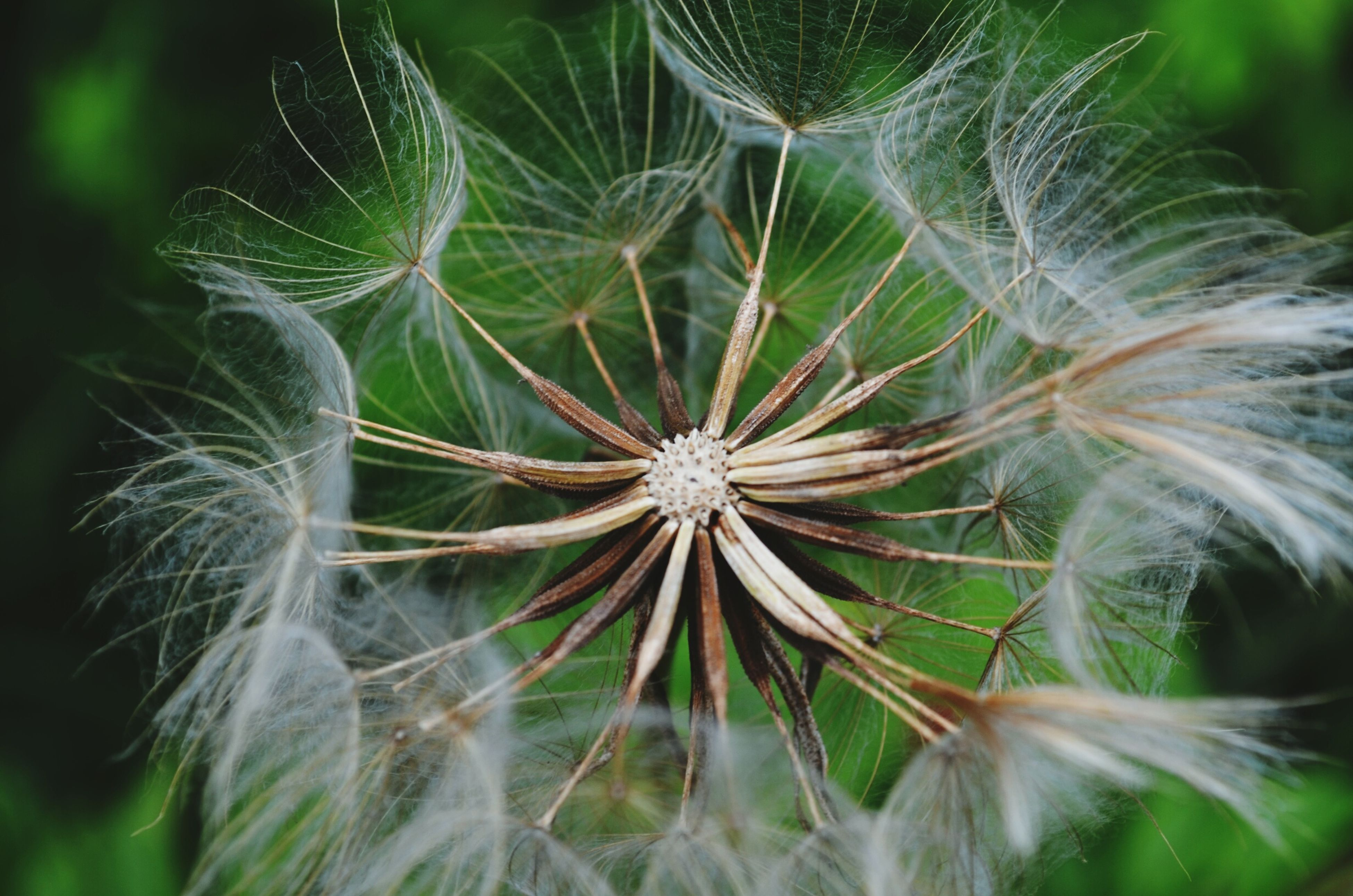growth, fragility, close-up, nature, plant, beauty in nature, freshness, focus on foreground, dandelion, outdoors, day, no people, flower, natural pattern, dandelion seed, single flower, leaf, softness, green color, low angle view