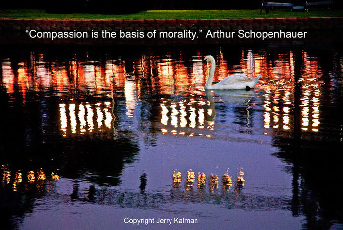 #Quotograph: the lagoon swan at #Fallbrook's #GrandTradition during a night concert and a quote by Arthur Schopenhauer California Colors Fallbeauty Fallbrook Grand Tradition Lagoon Portrait Quotograph Schopenhauer