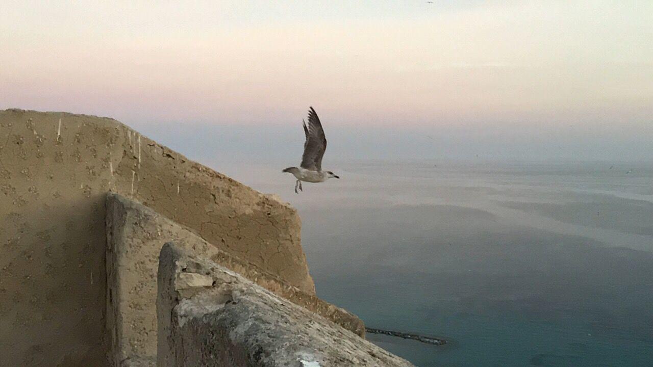 Vuelo de gaviota gull flight Hello World ocean Relaxing First Eyeem Photo Castillo De Santa Bárbara